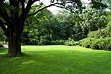 Nature's Seed TURF-SS-5000-F Sun & Shade Grass Seed Blend, 5000 sq. ft.