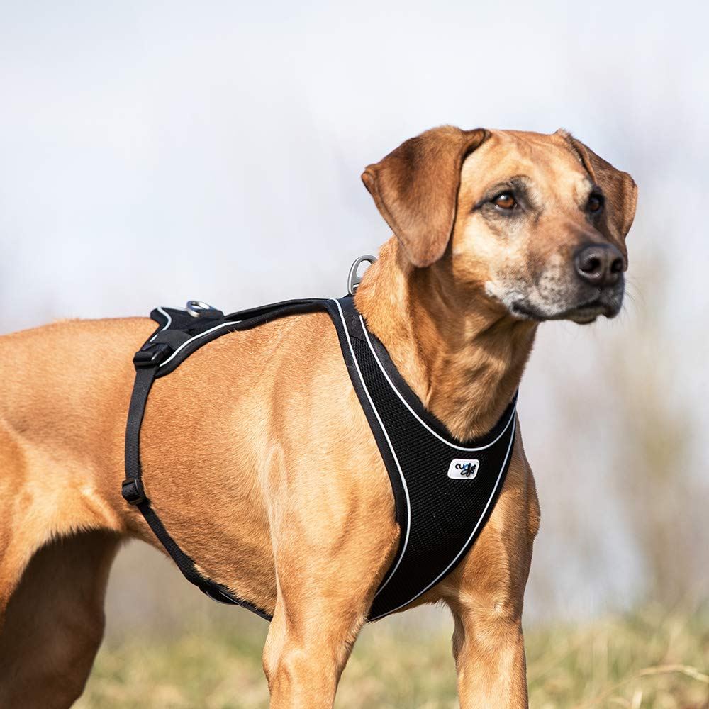 Curli Belka Comfort - Arnés: Amazon.es: Productos para mascotas