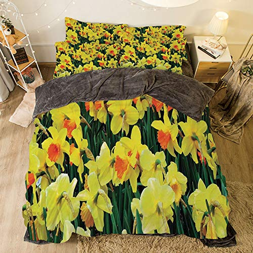 Flannel 4 Piece Cotton Queen Size Bed Sheet Set for bed width 6.6ft Winter Holiday Pattern by,Daffodil Decor,Daffodil Narcissus Gardening Nature Botanical Theme Seasonal Floral Picture Print,Yellow