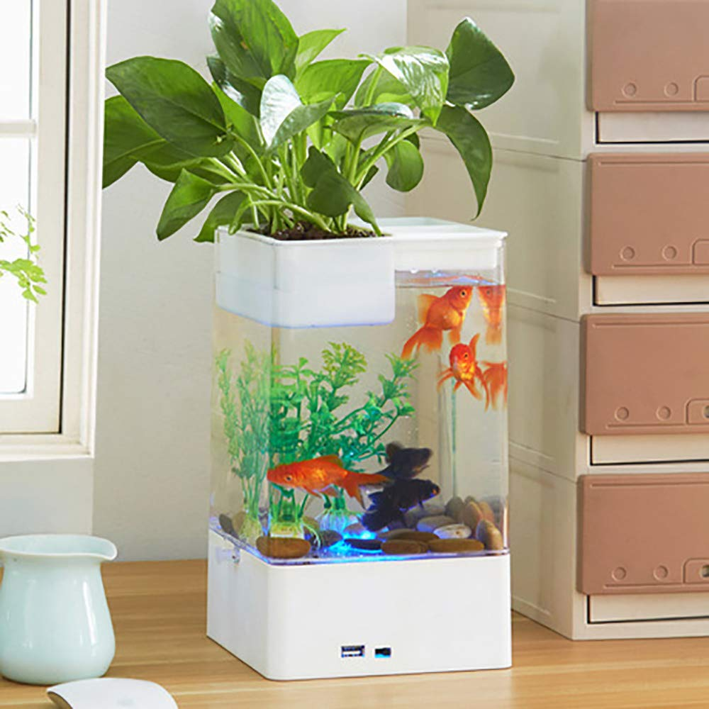 Mini Acrílico Goldfish Bowl Office Transparente Noche Creativa Luces Fácil De Limpiar Acuario Decoración De Escritorio,White: Amazon.es: Jardín