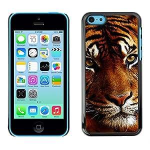 - CAT MUZZLE TIGER ANIMAL BIG ORANGE SLEEPY - - Monedero pared Design Premium cuero del tir???¡¯???€????€?????n magn???&rsquo