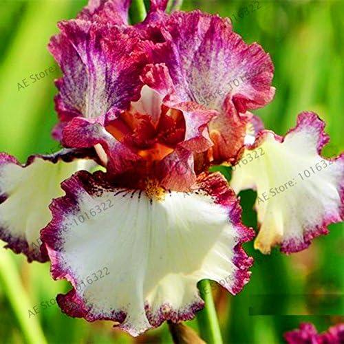 50pcs / bag semillas iris, flor jardín perenne populares, flor corte magnífico semillas de flores raras para el jardín de la plantación de orquídeas 6: Amazon.es: Jardín