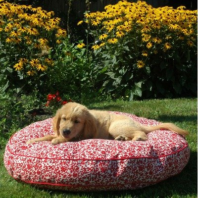 Snoozer Pool and Patio Round Pet Bed, Large, Strawberry Slushy Floral