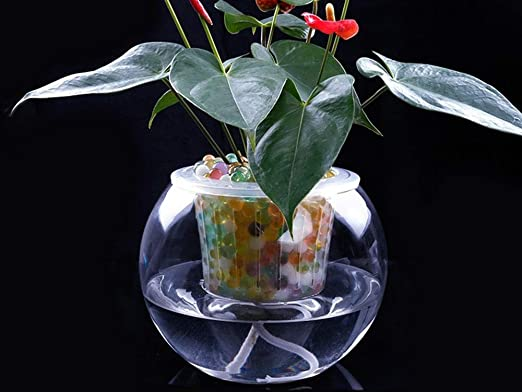 Ailihan Cristal florero agua cultivo cocodrilo pera árbol verde cebolla Jacinto pecera: Amazon.es: Jardín