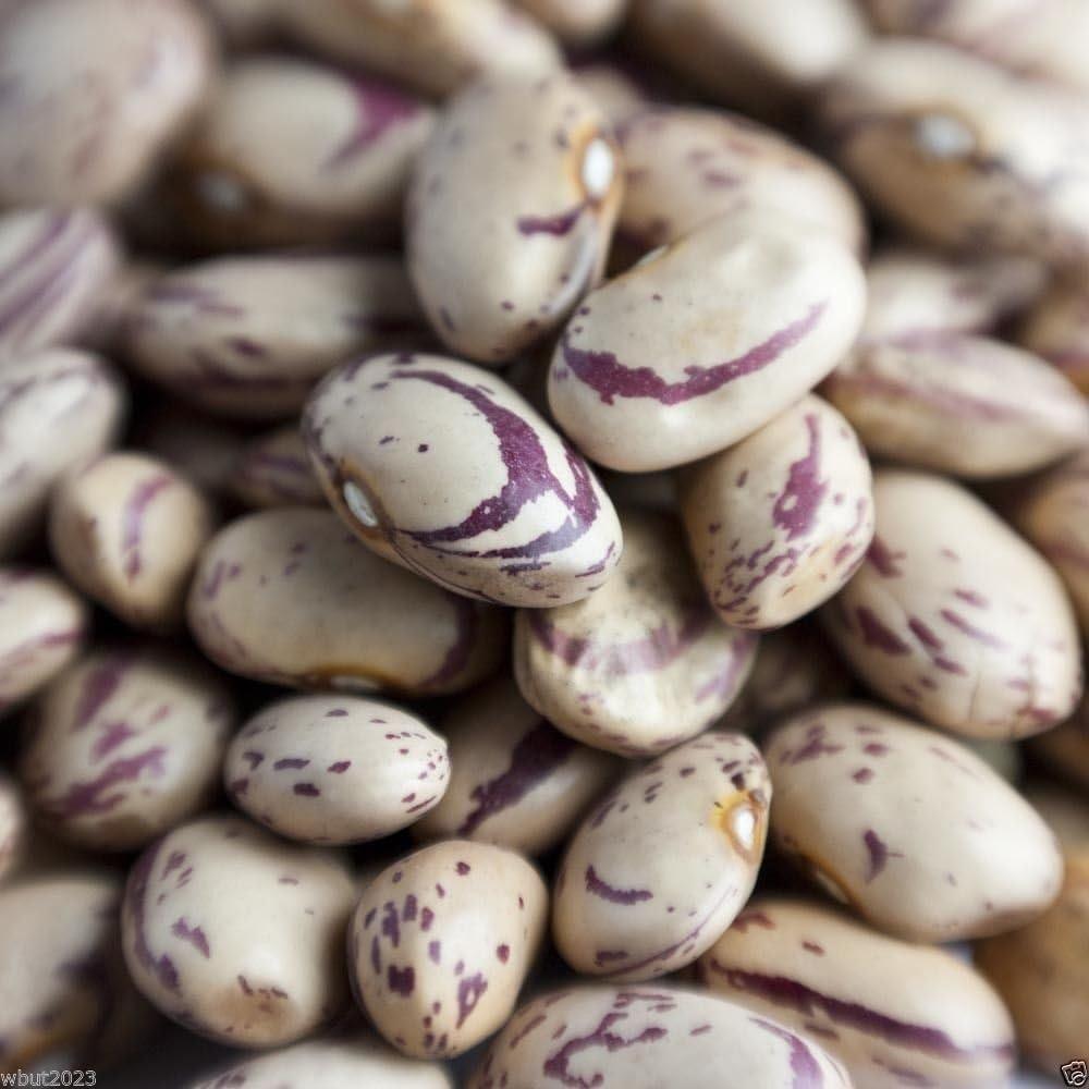 Shoppy Star: 100 Romano Bean, de la herencia, las semillas son de ...