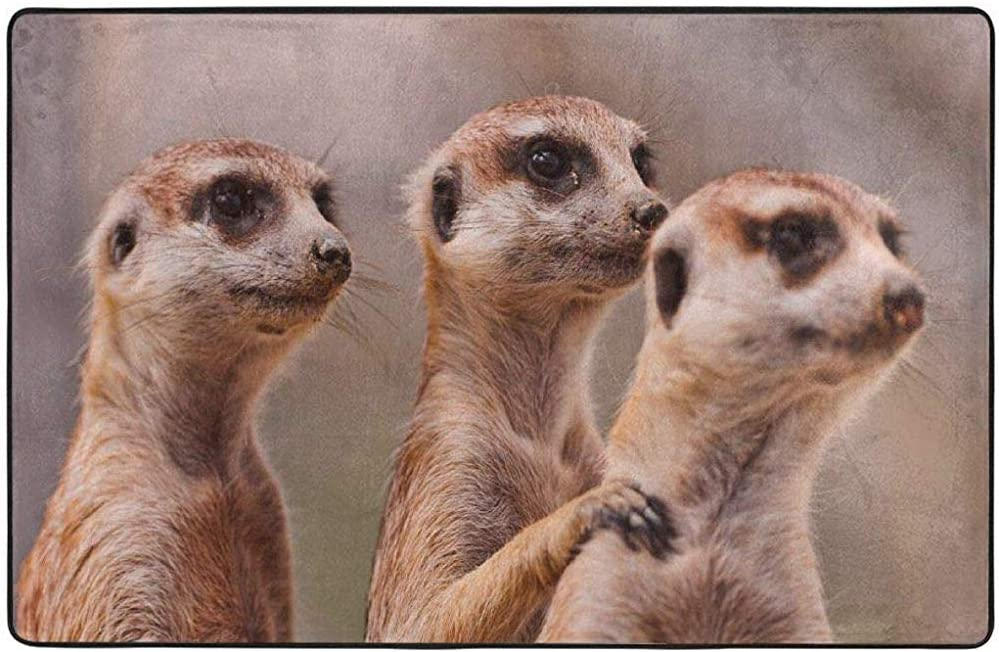 Machine Washable Flannel Carpet Animal Three Brown Meerkats 60 X 39inch Rugs Non Slip Rubber Backing Mats Amazon Co Uk Kitchen Home