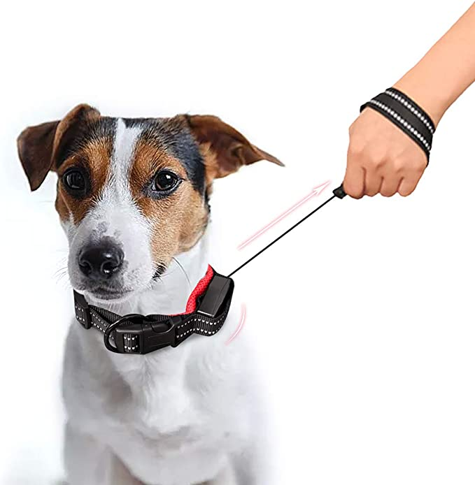 PACKAGE Leash /& Collar Combo! The MAKO Dog Collar with WANDERER Leash