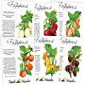 Habanero Pepper Seed Packet Assortment (6 Individual Seed Packets) Non-GMO Seeds by Seed Needs