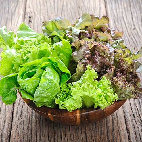 Lettuce Seeds - Mesclun Mix - 1/4 Pound, Mixed, Vegetable Seeds