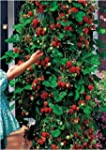 Trailing Strawberry Seeds - Runners u...