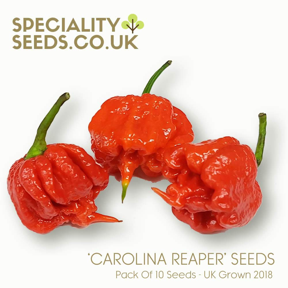 10 Carolina Reaper Seedstest Pepper on Earth RARE Pepper Home Planting Gift UK