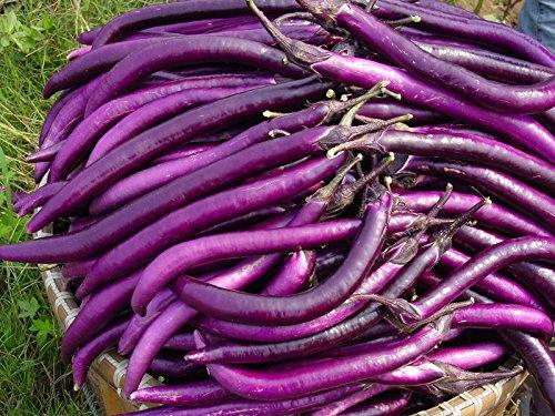 semillas de plantas hort/ícolas verde natural la semilla de berenjena p/úrpura 200PC Sencillo establecimiento del jard/ín