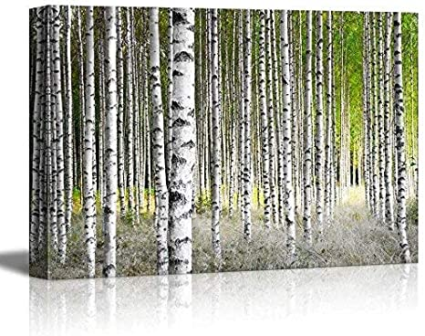 Wall26 Canvas Prints Wall Art Birch Trees In Bright Sunshine In Late Summer Modern Wall Decor Home Decoration Stretched Gallery Canvas Wrap Giclee Print Ready To Hang 24 X
