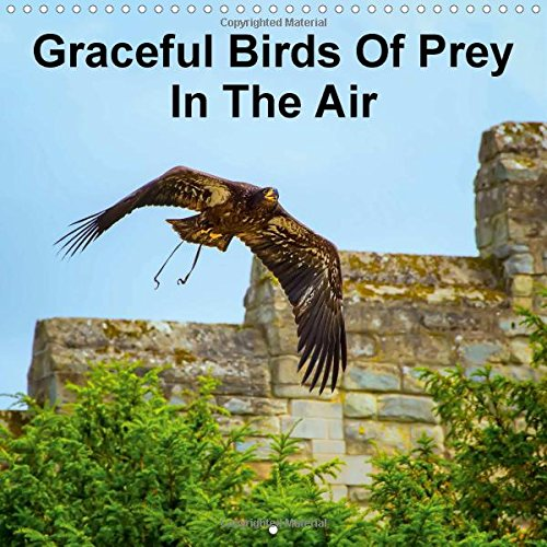 Graceful Birds Of Prey In The Air 2015: Amazing impressions of graceful birds of prey in the air (Calvendo Places) PDF