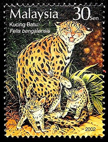 Amazon com: Leopard Cat Felis Bengalensis -Framed Postage