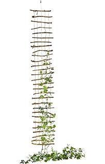 Support pour plantes grimpantes, treillis pour plantes grimpantes en ...