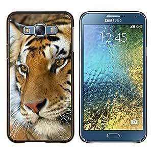 Jordan Colourful Shop - Tiger Cute Feline Animal Orange Africa For Samsung Galaxy E7 E7000 Personalizado negro cubierta de la caja de pl????stico