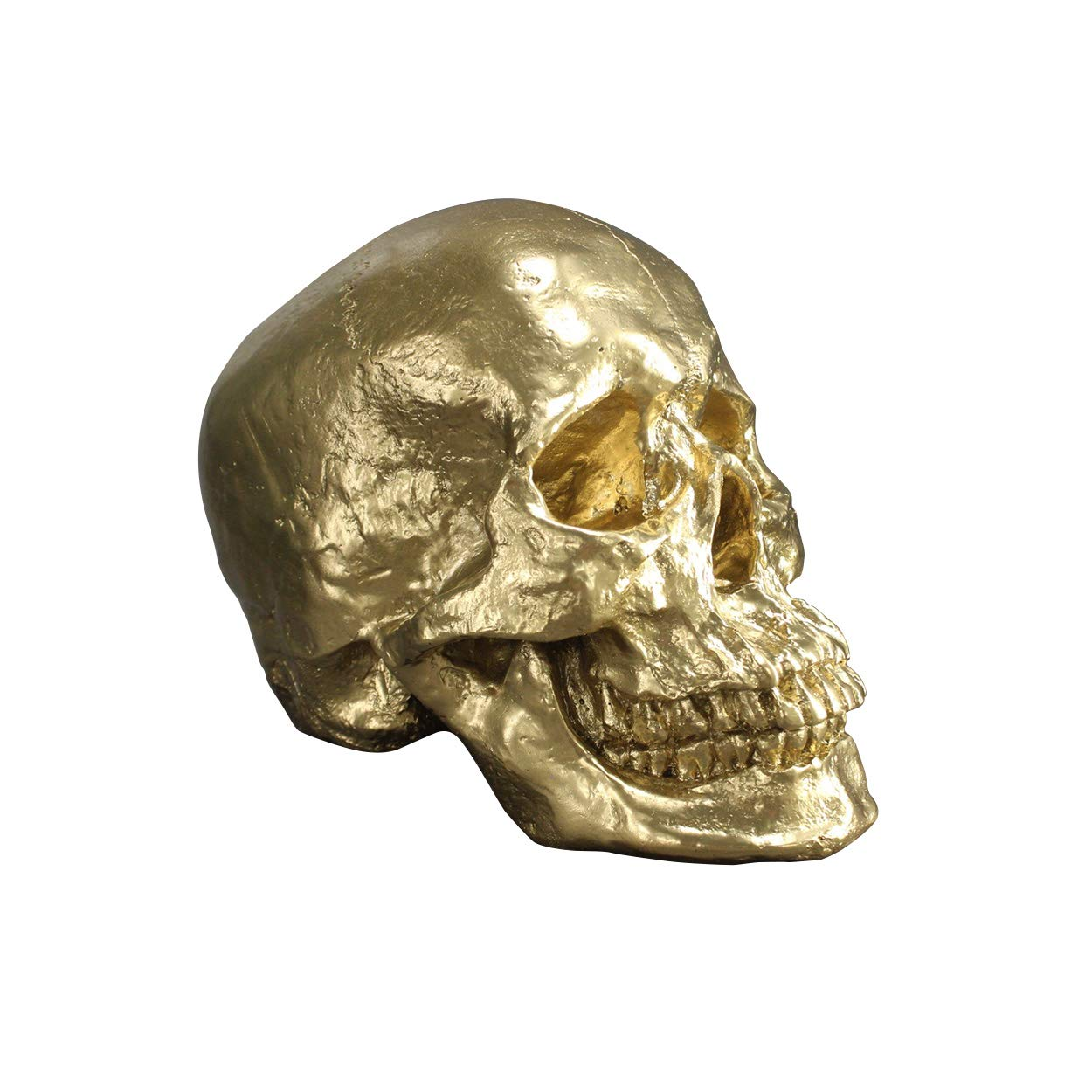 Wall Charmers Life Size Human Skull - 8.5'' Gold Faux Human Anatomy - Table Top Skeleton Head Home Decor
