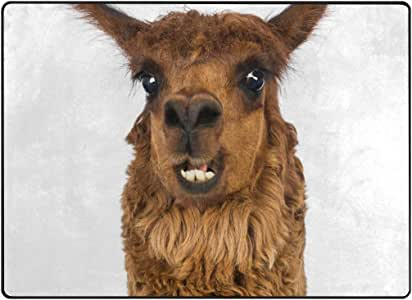 Mnsruu - Alfombra de primer plano de alpaca sonriente ...