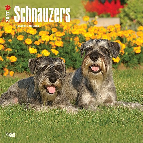 2017 Monthly Wall Calendar - Schnauzers (International Edition)
