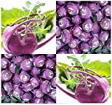 100 EARLY PURPLE VIENNA ~ ORGANIC ~ Kohlrabi seeds Later and larger than White Vienna