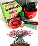 Premium Adenium Obesum Bonsai Gorwing Kit - Includes ceramic pot&tray-allUneed in 1BOX- Excellent as a gift