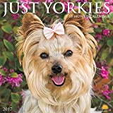 Just Yorkies 2017 Wall Calendar (Dog Breed Calendars)