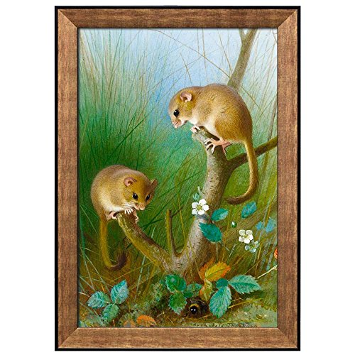 Illustration of 2 Animals Playing on a Plant by Archibald Thorburn Framed Art