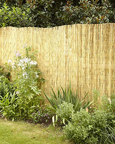 Lewis Hyman Garden Path 0406166 Natural Polishe and Peeled Reed Fencing 16' Long by 6' -