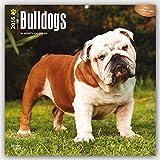 Bulldogs 2016 - Bulldoggen - 18-Monatskalender mit freier DogDays-App: Original BrownTrout-Kalender [Mehrsprachig] [Kalender] (Wall-Kalender)