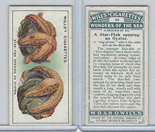 - W62-187 Wills, Wonders of the Sea, 1928, 36 Star Fish Opening an Oyster