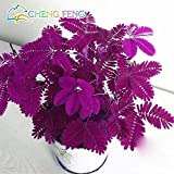 s 30pcs Bashful Grass Seeds Mimosa Pudica Linn, Foliage Mimosa Pudica Sensitive Bonsai Plant Home Garden Green