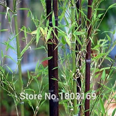 100pcs/lot factory wholesale fresh Black Bamboo Seeds : Garden & Outdoor