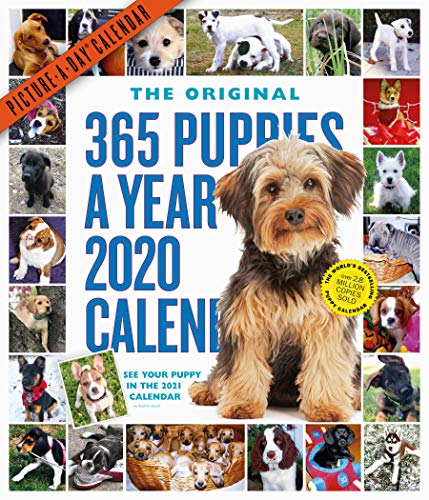 365 Puppies-A-Year Picture-A-Day Wall Calendar 2020