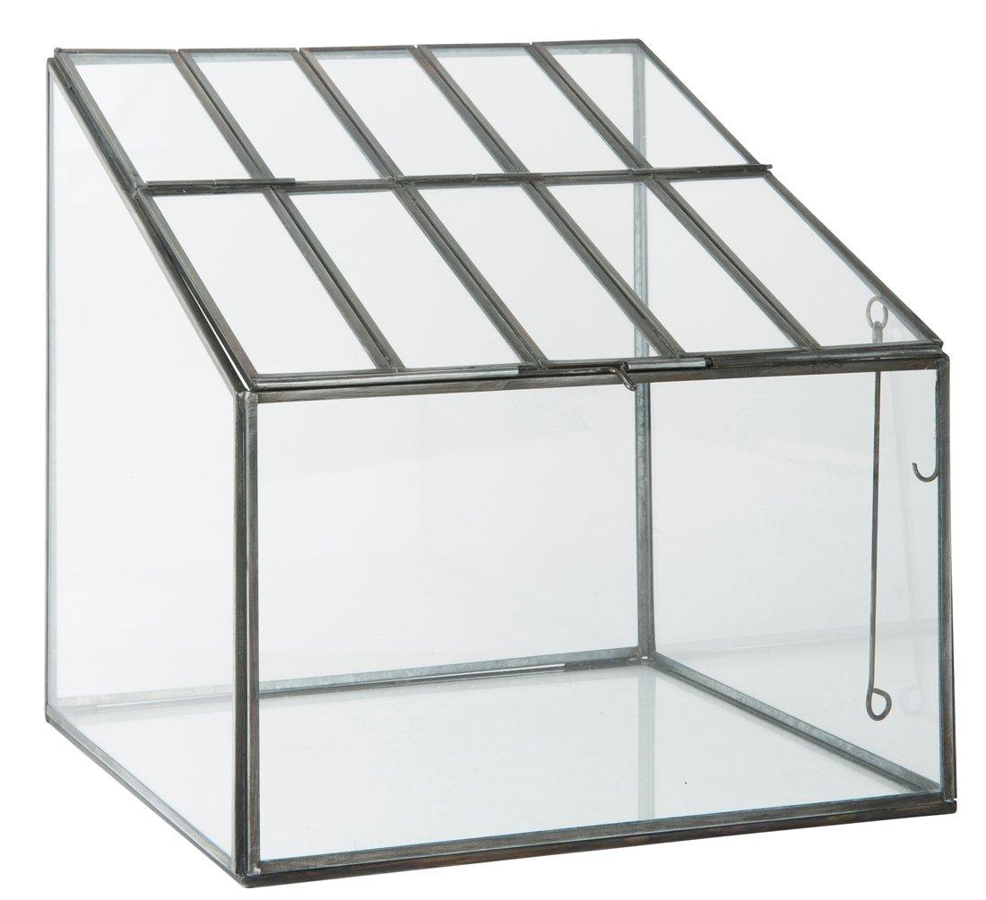 Semillero invernadero terrario macetero en cristal y Metal negro de ...