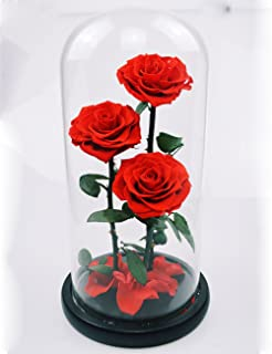 Amazon sale lladro porcelain poppy flowers vase purple preserved rose never withered roses flower in glass dome gift for valentines day anniversary birthday mightylinksfo