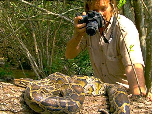 Giant Python Invader ()