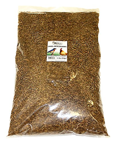 Bulk Dried Mealworms (11 lb.) Approx. 175,000 by Exotic Nutrition