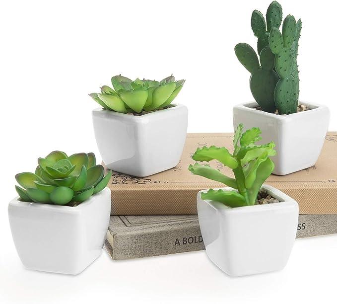 Macetas para cactushttps://amzn.to/2Ds5Wfw