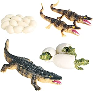 Crocodile Figurines, Realistic Plastic Wild Worker Crocodile Growth Cycle Figurine Set for Collection Science Educational Prop, Miniature Worker Crocodile Statue, Home Decor Accessories, Pack of 4