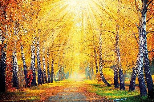 Fototapete Herbstlicher Wald Wand-dekoration - Wandbild Waldlichtung Poster-Motiv by GREAT ART (210 x 140 cm)