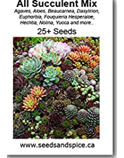 All Succulent Species Mix 25, 250 and 500 seed quantities (25 Seeds)