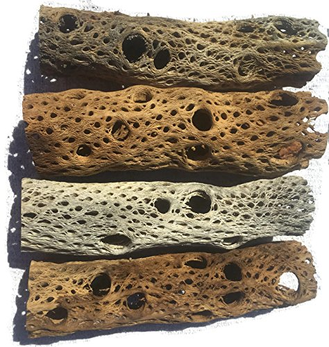 3, 6, 9, 12 Inch All Natural Teddy Bear Cholla Wood Extra Hollow Untreated Organic Aquarium Driftwood Decoration Chew Toy Shrimp Crab Pleco Cichlid Nano Tank Birds 1 or 5 Pieces (1 Piece, 9 inch)