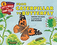 From Caterpillar To Butterfly (Let's Read And
