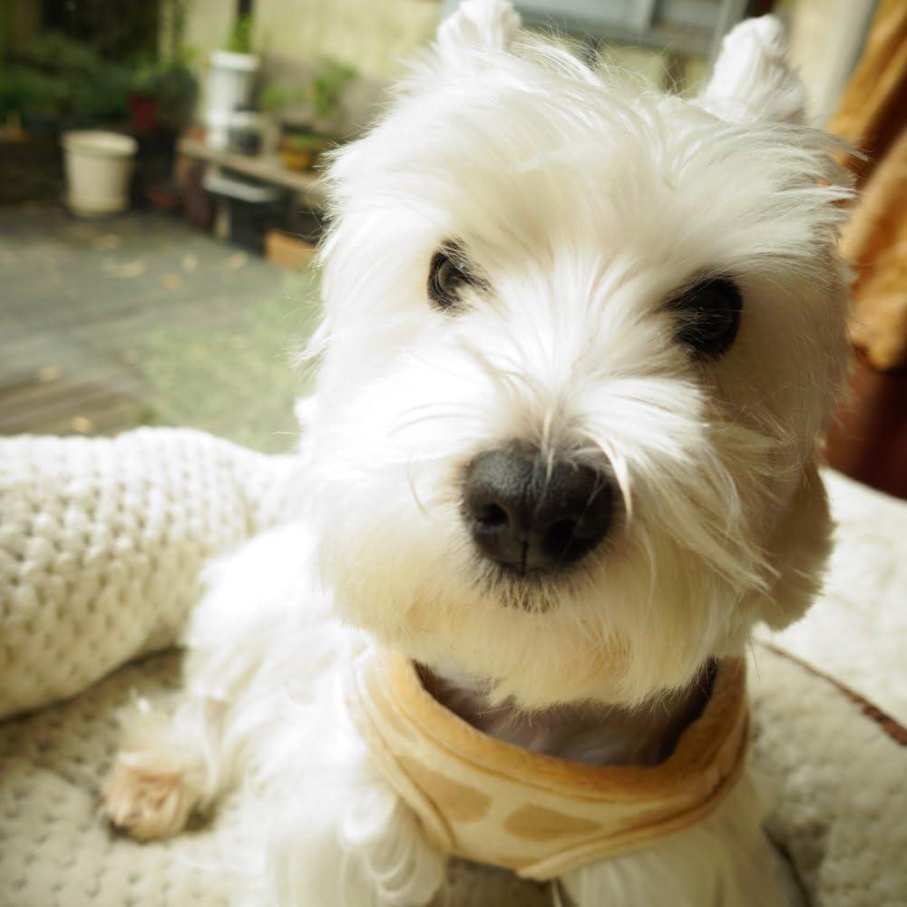 Small fits Pets 3-6 Pound,Medium 8-12 Pound,Large 12-16 Pound Lanyar Freece Soft Pet Harness Vest for Small//Medium Pets,Size Runs Smaller