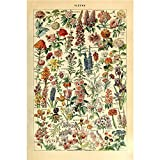Vintage Poster Print Art Botanical Floral Flower Collections Identification Reference Chart Diagram12.99'' x 19.69''