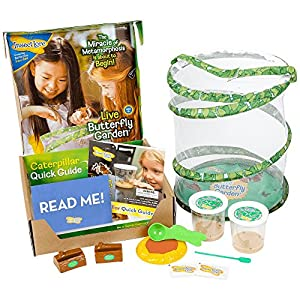 Insect Lore Deluxe Butterfly Garden with 2 Live Cups of Caterpillars and Feeding Habitat Kit