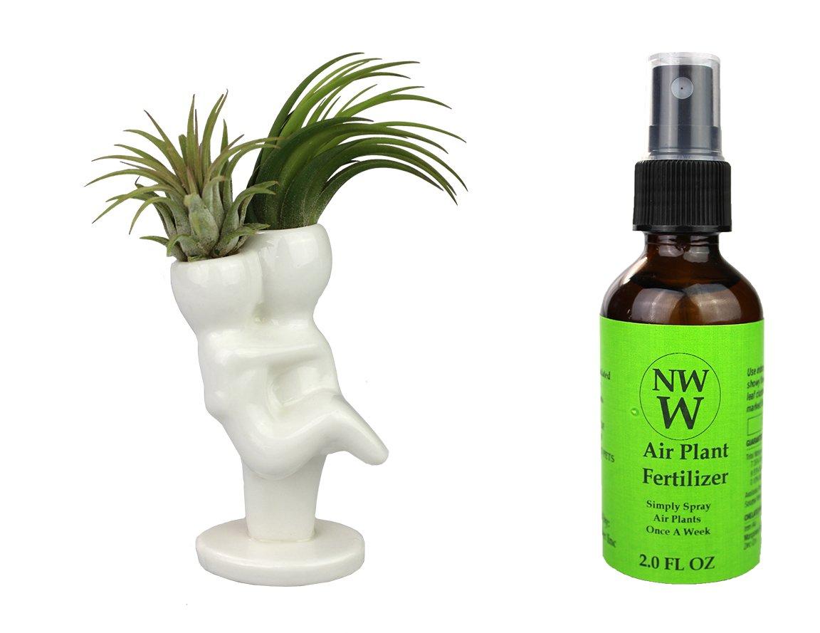 NW Wholesaler ''Mr & Mrs'' Air Head White Ceramic Pot Complete Kit With Live Tillandsia Air Plant + Free ''Hair Spray'' Fertilizer