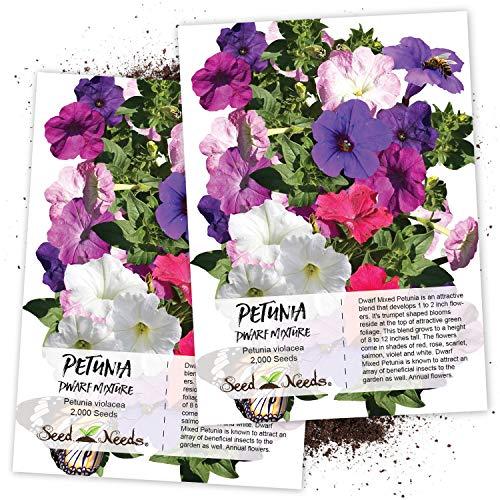 (Seed Needs, Dwarf Petunia Mixture (Petunia Nana compacta) Twin Pack of 2,000 Seeds Each)