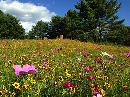 Quick Bloom Wildflower Seed Mix (1lb)